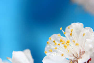 Spring flower background for desktop