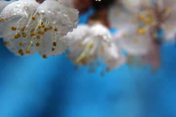 Spring flowers with drops №29884