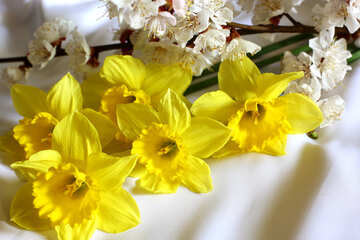Spring flowers №29971