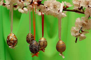 Eggs on flowering branch №29844
