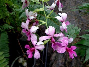 Exotic flower №29298