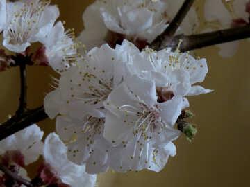 Flower fruit tree №29953