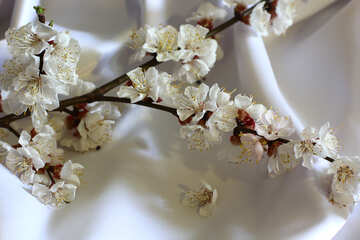 Flowering branch №29957