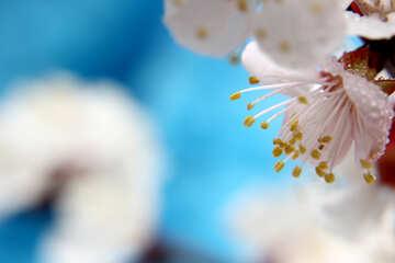 Gioia di primavera №29883