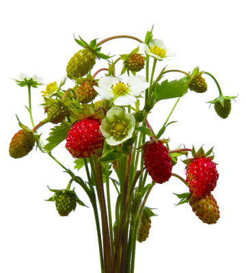 Erdbeeren, isoliert №29481
