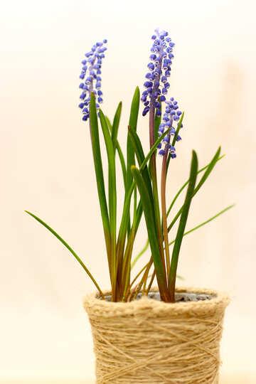 Flower in flowerpot №29813