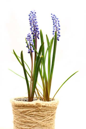 Flower in flowerpot №29814