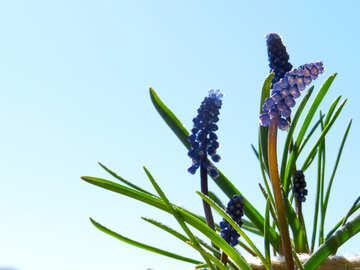 Spring morning №29649