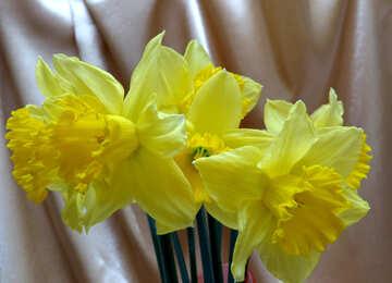 Frühlingsblumen №29942