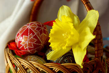 Narcissus and easter eggs №29703