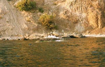 Bird Island №29203