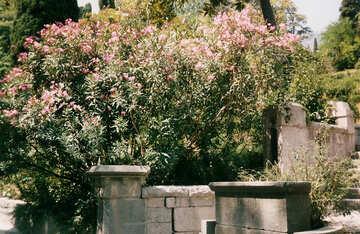 Giardino di Crimea №29275