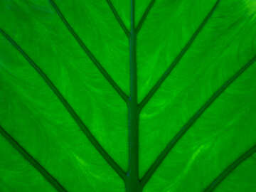 Texture leaf on gleam №29286