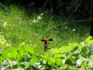 Watering vegetable garden №29067