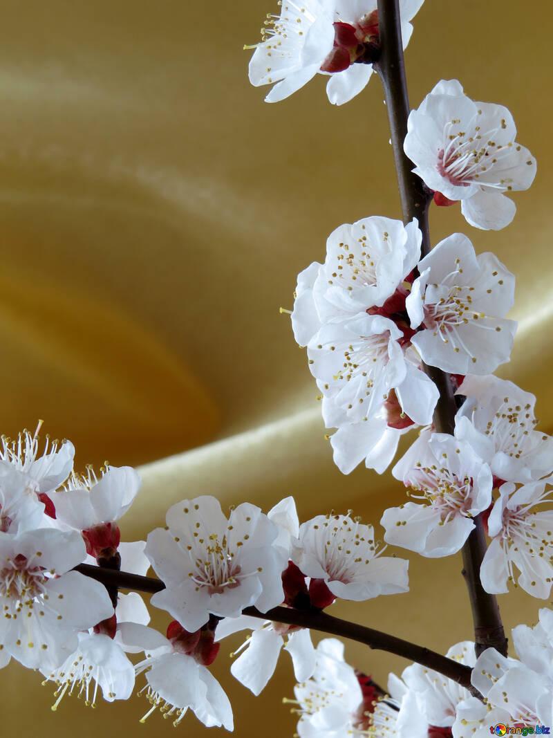Fondo oro con ramo fiorito №29936