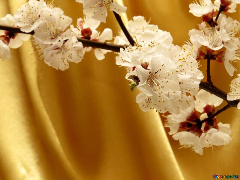 Fondo de primavera dorada №29947
