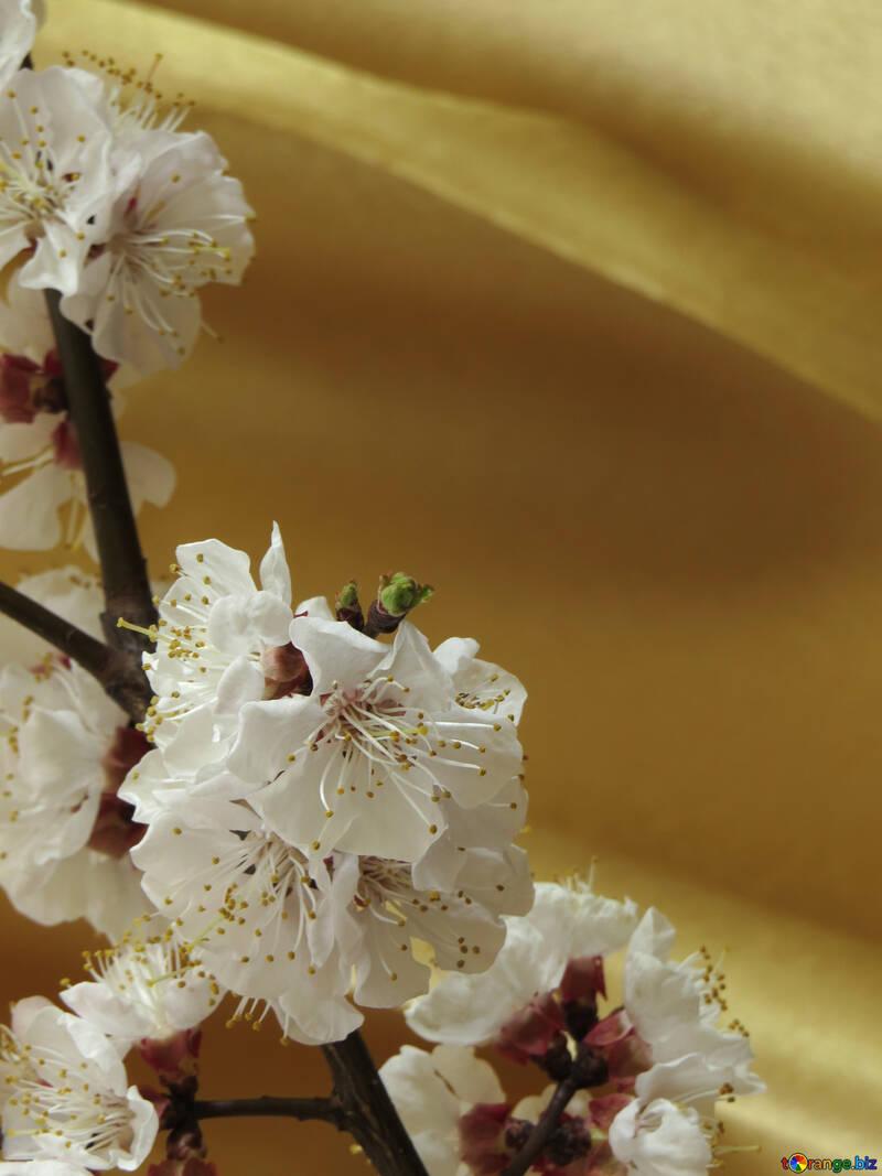 Sfondo di primavera per le congratulazioni №29952