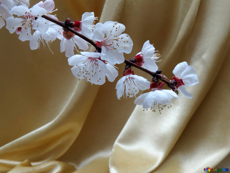 Flowering branch on background of golden fabric №29931