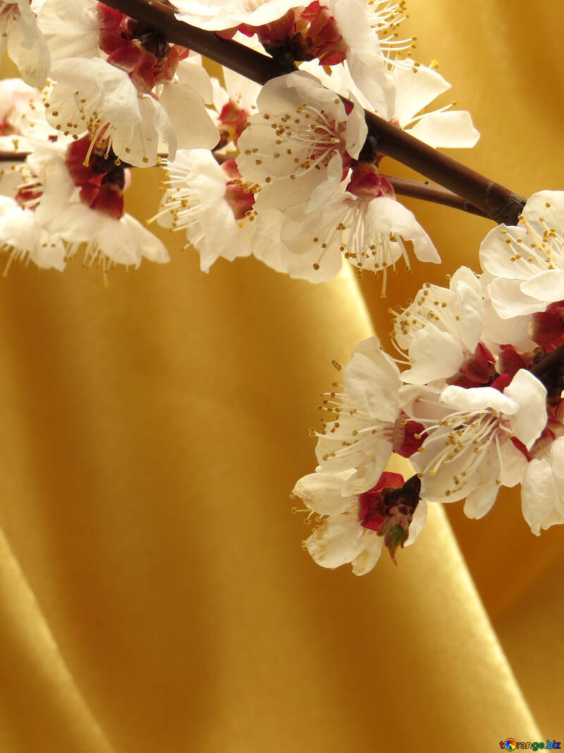 Yellow background and blossoming branch №29944