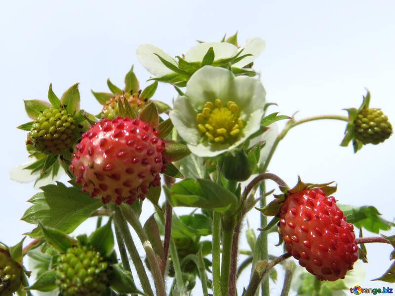 Strawberry berry background №29475