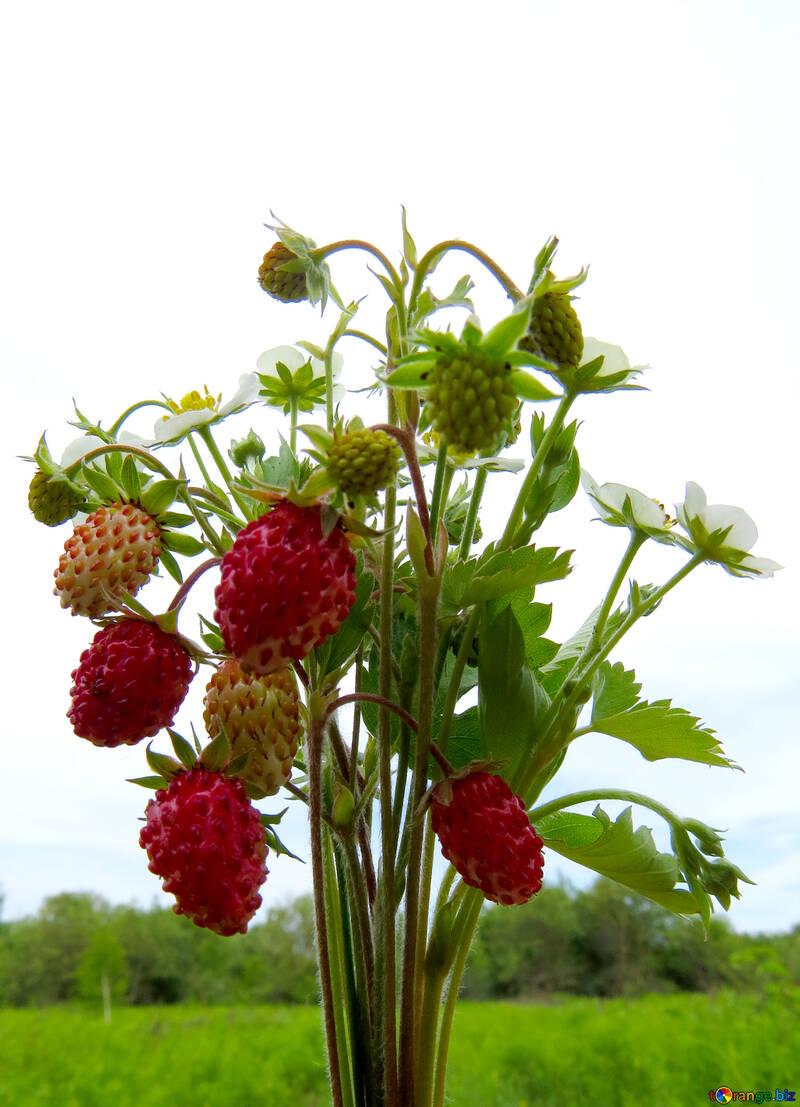 Vitamin bouquet №29509