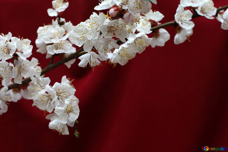 Spring branch on the desktop №29872