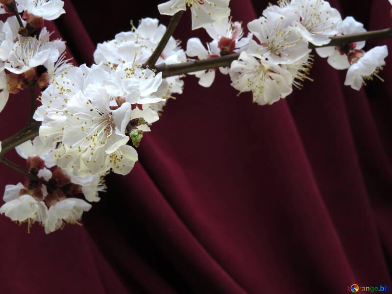 Flowering branch of fruit tree №29921