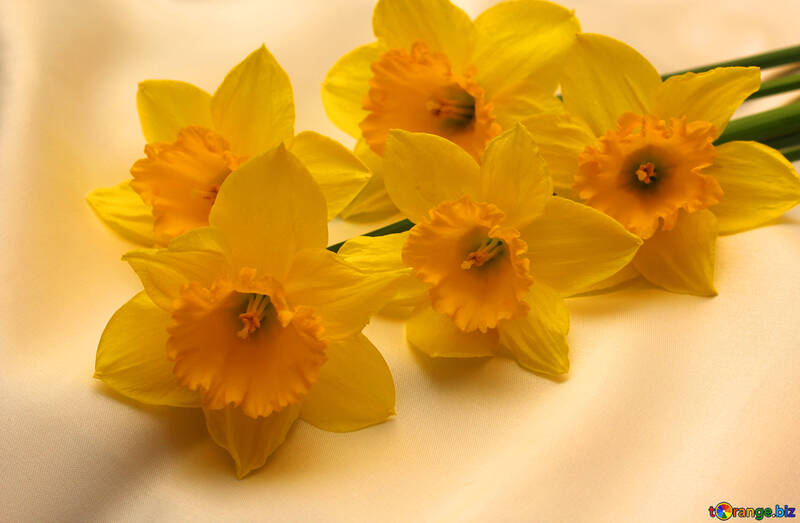 A bouquet of daffodils №29990