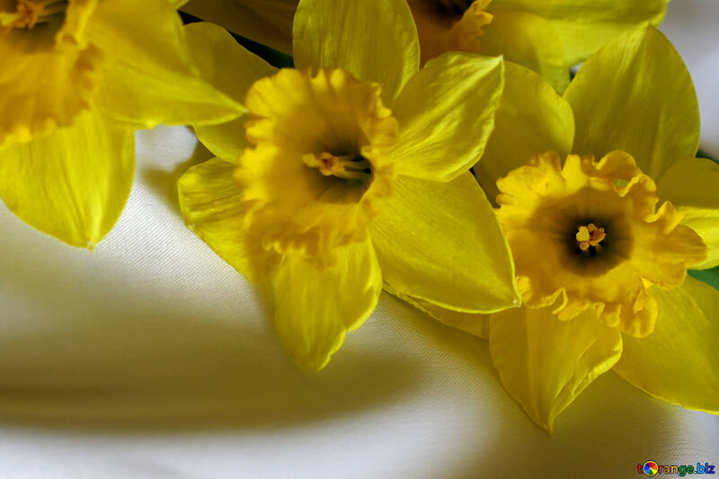 Bouquet of yellow daffodils №29987