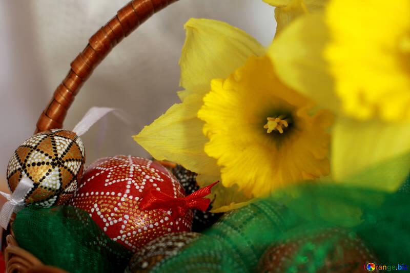 Easter daffodils №29711