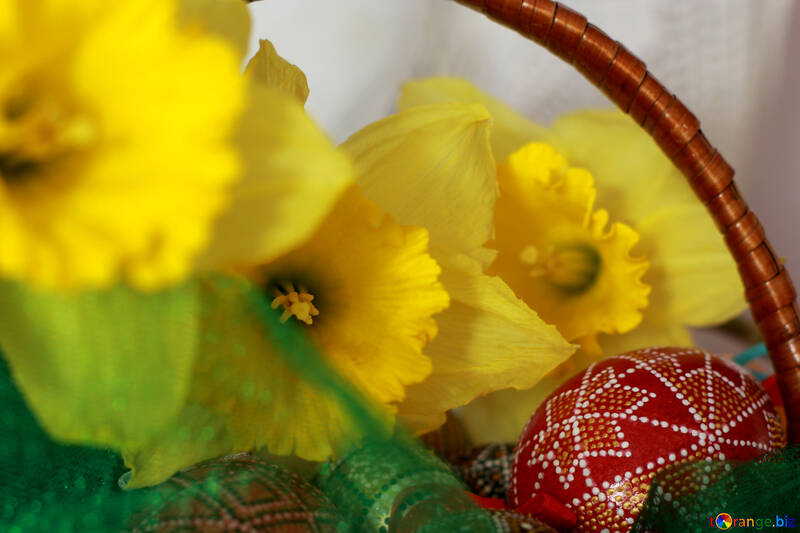 Spring daffodils №29710