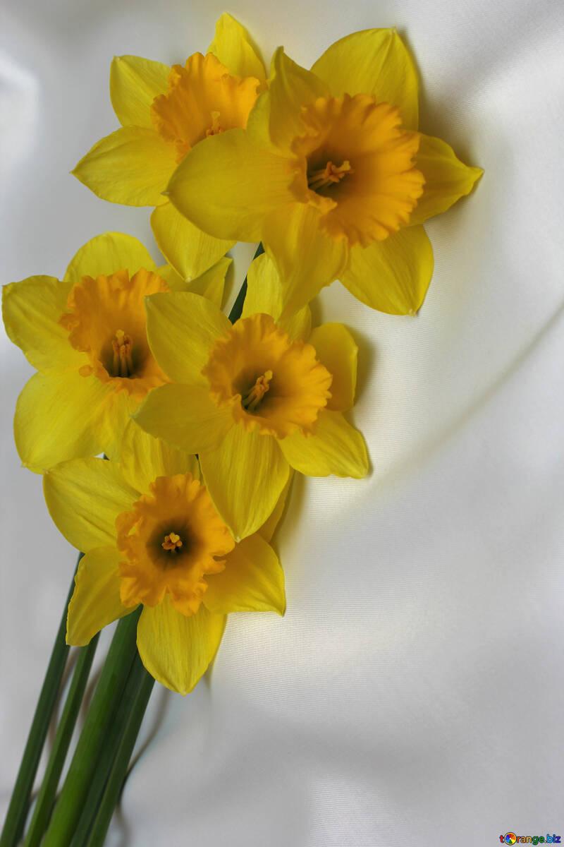 Ramo De Narcisos Narcisos Amarillos Narciso 29989 - Narcisos-amarillos