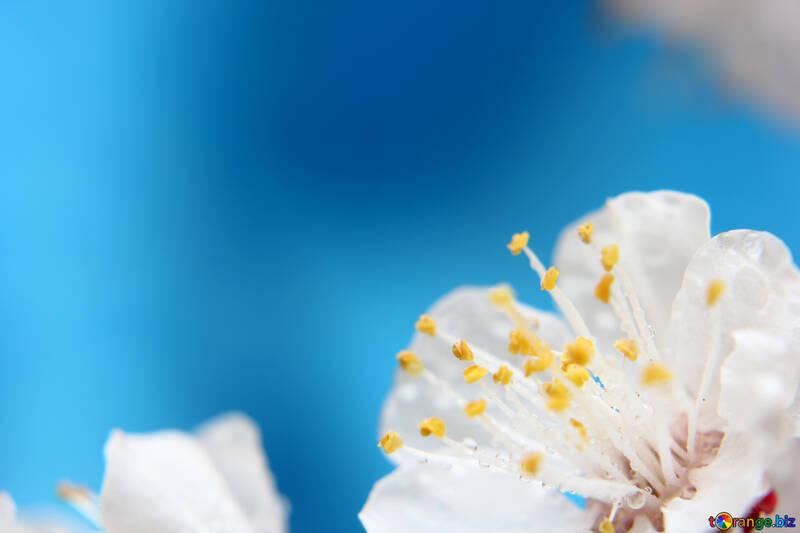 Spring flower background for desktop №29889