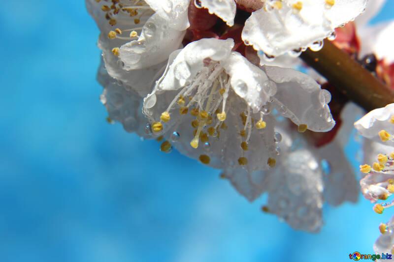 Photo de beau printemps №29894