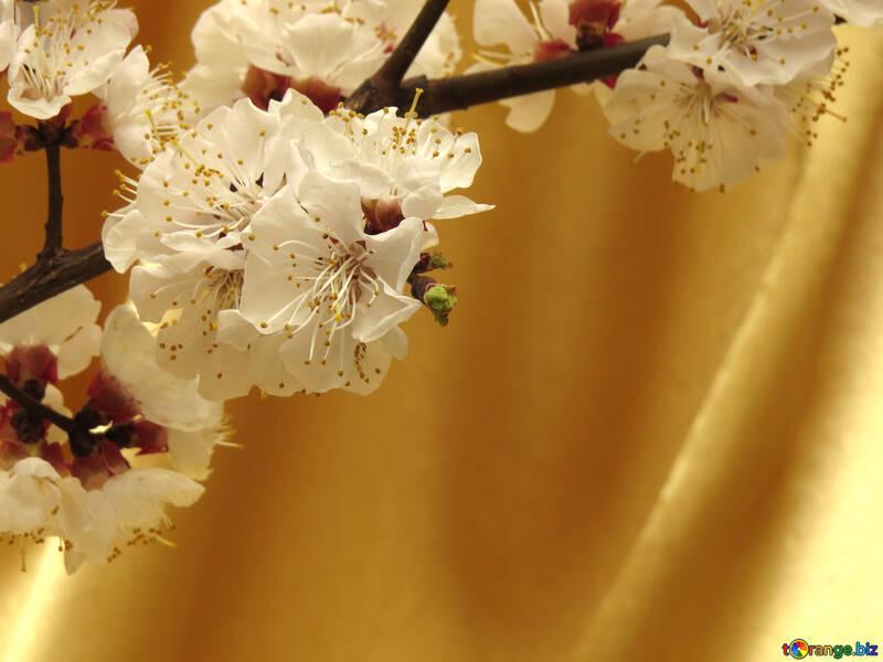 Весеннее цветущее дерево №29950