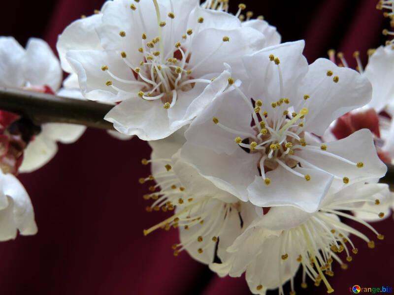 Цветы дерева №29918
