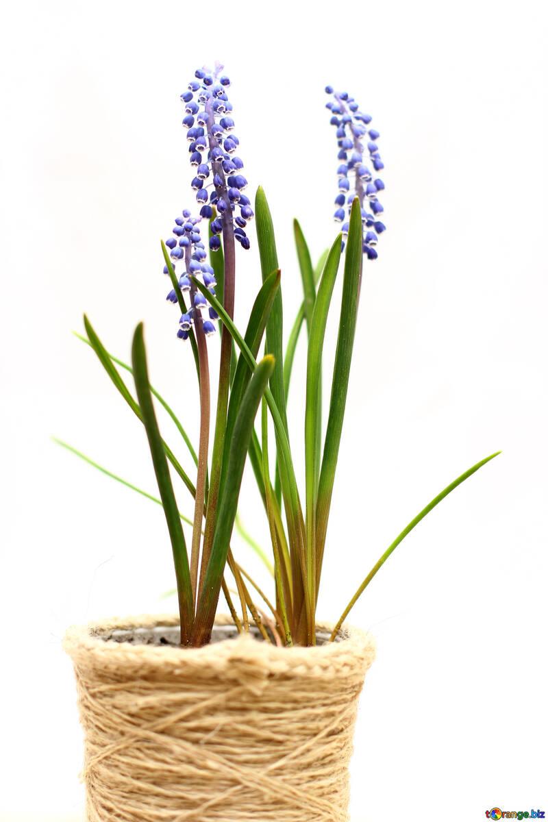 Flores en maceta №29814