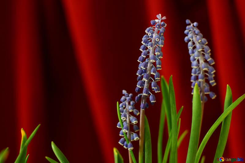 Flor de primavera №29778