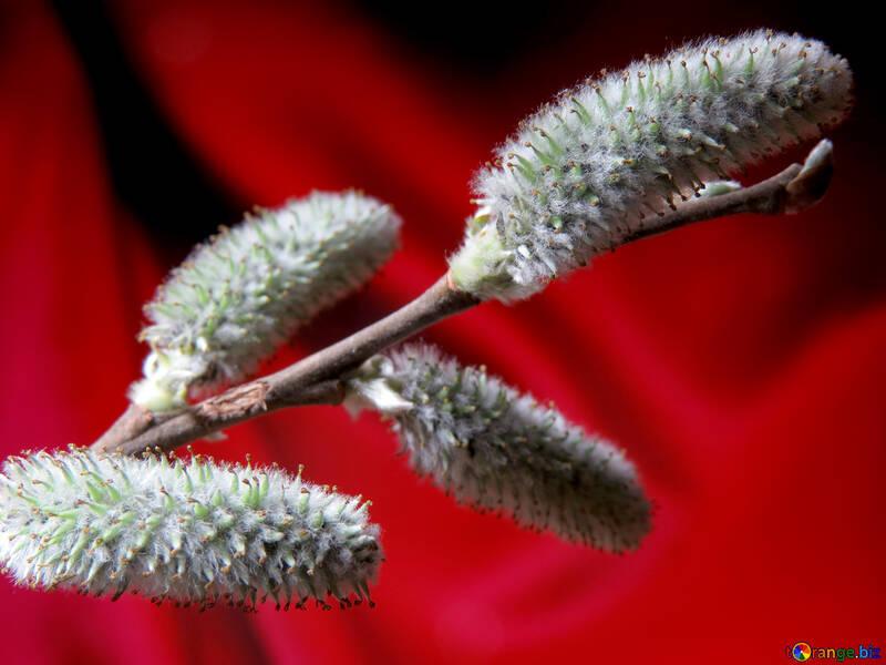 Flower Willow №29611