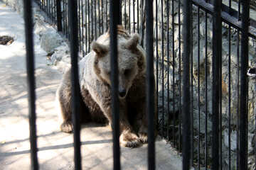 Bear in the cage  №3064