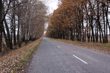 Strada vuota №3513