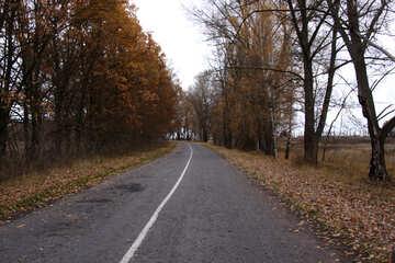 La strada tra i villaggi №3519