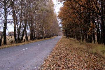Bordo della strada della strada №3509
