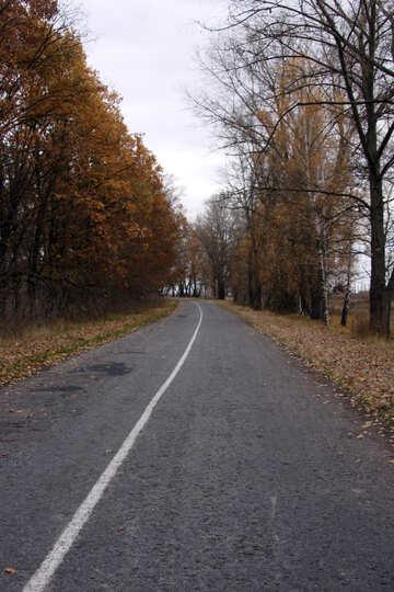 Strada con gli alberi sul ciglio della strada №3518