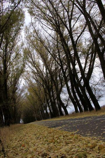 Gli alberi sopra la strada №3533