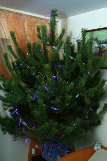 Fluffy Christmas tree in the corner №3945