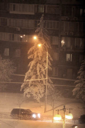snow-covered Christmas tree in the city №3492