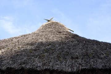 Old village roof of reeds  №3299