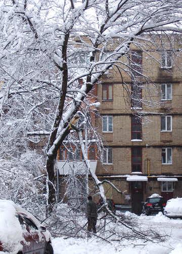 Holz  gefallen.  Schneefälle. №3444