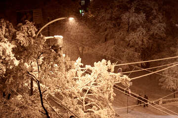 Snow sticking on the branches of trees  №3479